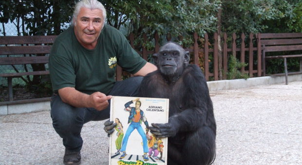 Daniel Berquiny e Tanga, lo scimpanzè del film Bingo Bongo